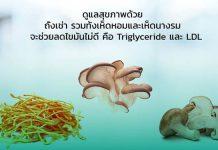 รักษาโรคเรื้อรัง โรคเลือ โรคภูมิ รักษาโรคที่ต้นเหตุ