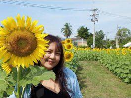 ปทุมธานี ประชาชน แห่เที่ยวทุ่งดอกทานตะวันบานสะพรั่งช่วงวันหยุด